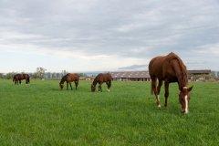 Herde2K.jpg